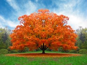 albero_autunno1