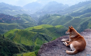 Dog-View-Landscape-Desktop-Wallpaper-HD