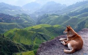 Dog-View-Landscape-Desktop-Wallpaper-HD