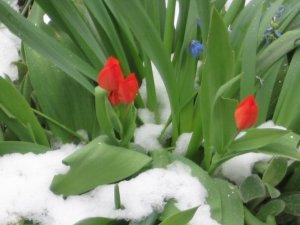 Весна_1_мая_2007_года